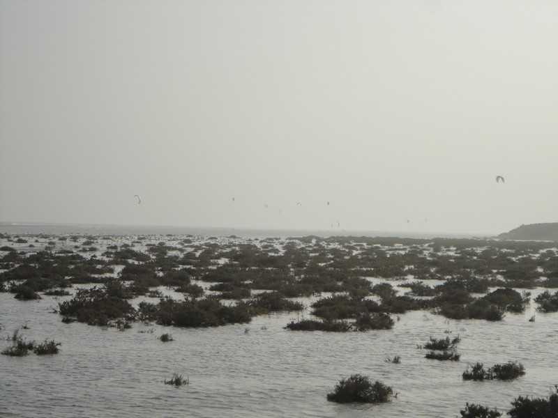 fuerteventura- Canare 81